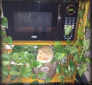 Georgie Plant2