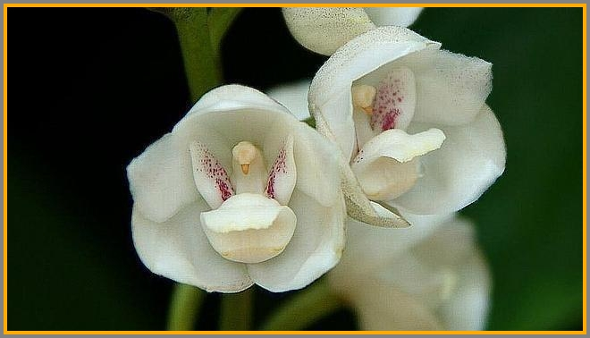 This looks like tiny white birds cradled in their little flower-shelters.